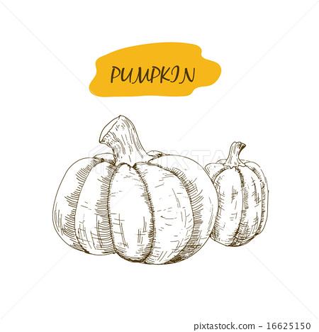 Pumpkin 16625150