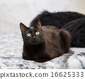 black cat sitting on a bed. fragment 16625333