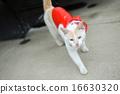 白貓 雨衣 藍色眼眸 16630320