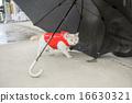 白貓 雨衣 藍色眼眸 16630321
