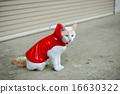 白貓 雨衣 藍色眼眸 16630322
