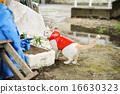 白貓 雨衣 藍色眼眸 16630323