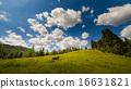 山峰 牧场 阿尔卑斯山脉 16631821
