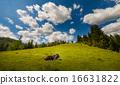 山峰 牧场 阿尔卑斯山脉 16631822