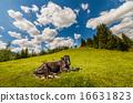 山峰 牧场 阿尔卑斯山脉 16631823
