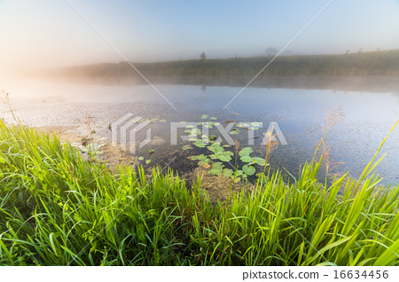 Fantastic foggy river with fresh green grass 16634456