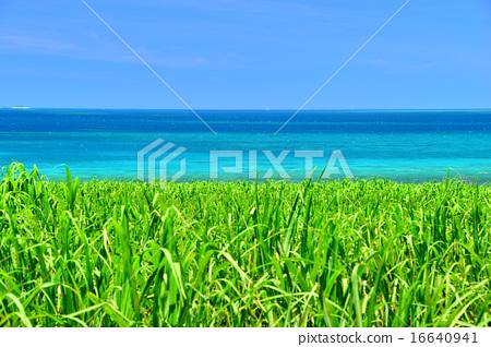 sugarcane, cane, blue water 16640941