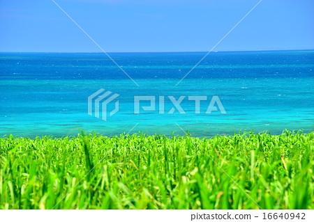 sugarcane, cane, blue water 16640942