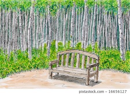자작 나무 숲 16656127