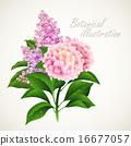 Botanical vector illustration. Vintage floral card 16677057
