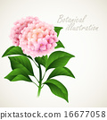 Botanical vector illustration. Vintage floral card 16677058