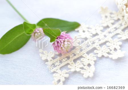 Pink and white senninchuko and torsion lace 16682369