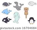 海洋動物 密封 逆戟鯨 16704684