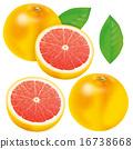 切開 葡萄柚 割 16738668