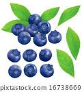 藍莓 莓 真實 16738669
