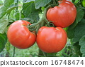 tomato, foods, healthy 16748474