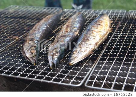 秋刀魚 16755328