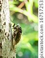 飛蛾 蝗蟲 吮吸 16757253