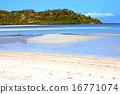 isle seaweed coast 16771074