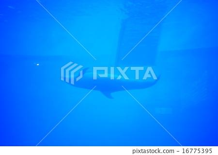 海豚 16775395