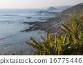 日南海岸 16775446