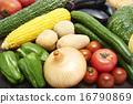 蔬菜 夏季蔬菜 夏令時蔬 16790869