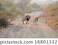 獅子 夫婦 一對 16801332