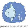 兔 兔子 翻车鱼 16812367