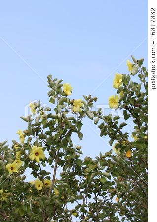 하마보우 꽃 16817832