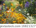แปลงดอกไม้,ฤดูใบไม้ร่วง,ดอกไม้ 16821327