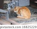 폐선 기차 아래의 도둑 고양이 고양이 16825229