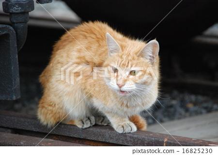 폐선 기차에서 나온 도둑 고양이 고양이 16825230