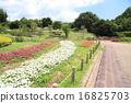 ดอกไม้บานเต็มที่,ฤดูร้อน,หน้าร้อน 16825703