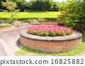 ฤดูร้อน,หน้าร้อน,แปลงดอกไม้ 16825882