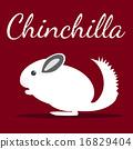 Chinchilla 16829404