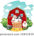Sheeps 16842839