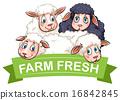 Sheep. 16842845