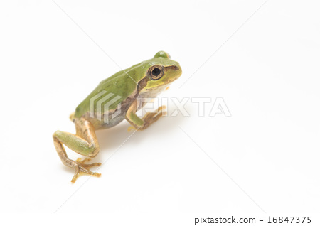 amphibians amphibian sample Amphibians and reptiles is a comprehensive guide to the native and non-native species of amphibian and reptile found in the british isles professor trevor beebee.