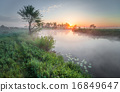 morning,landscape,forest 16849647