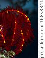 水下照片 咸水鱼 海水鱼 16858841