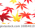Leaves of one side of maple 16864610