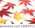 Leaves of one side of maple 16864611