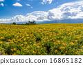 盛开 晴天 夏季图像 16865182