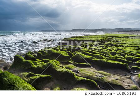 海岸邊的藻礁 16865193