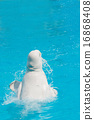 dolphin, water, pool 16868408