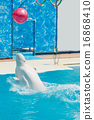 dolphin, water, pool 16868410