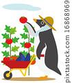 收穫 企鵝 豐收 16868969