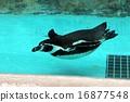 불티 나게 수영 펭귄 16877548