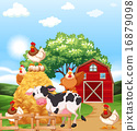Farm animals 16879098