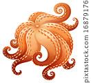 Octopus 16879176